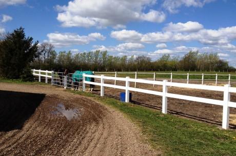 2 heste udenfor