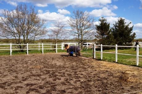 hest alene i gården