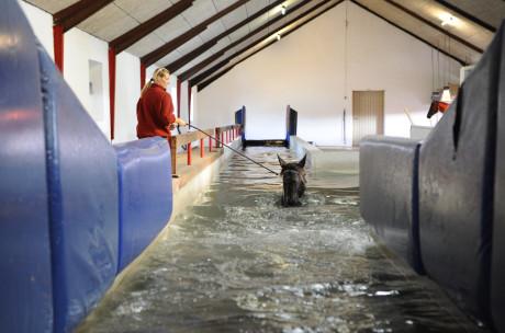 Hest på vej ind i bassin