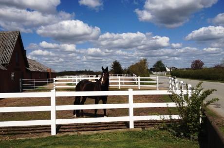 hest udenfor foran