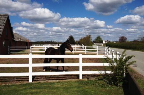 hest udenfor foran 2