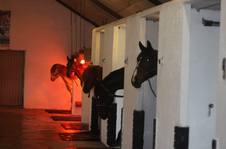 Heste plejning