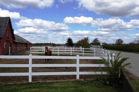 hest udenfor foran 3
